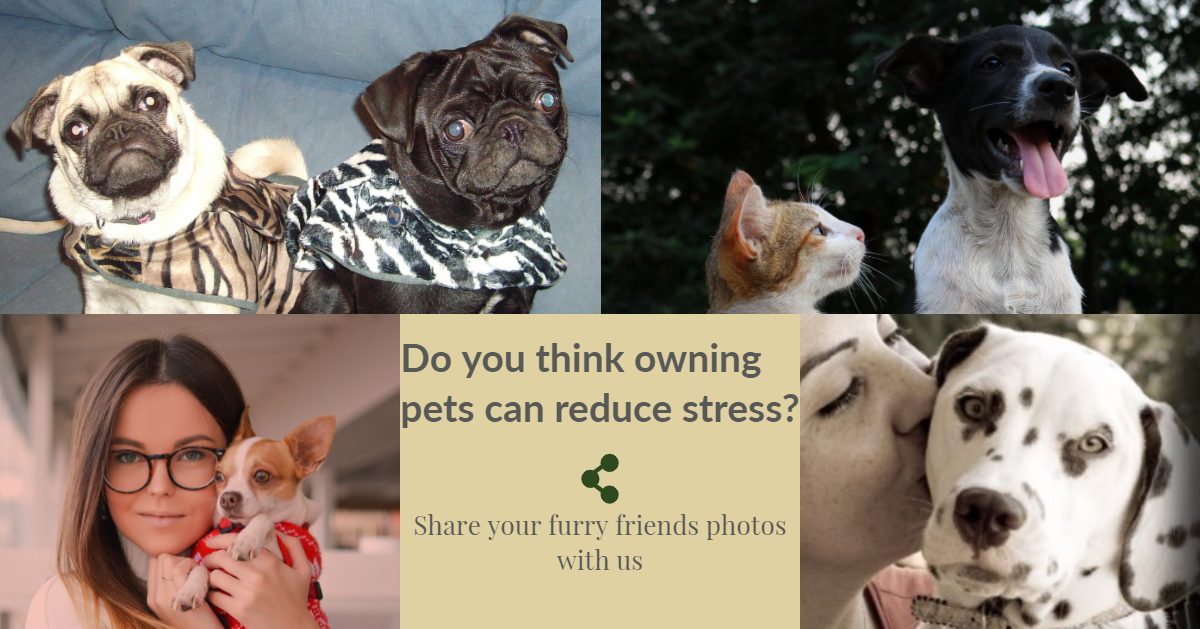 Do you think owning pets can reduce stress?